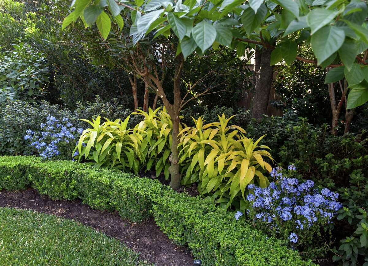 In a lush private River Oaks garden designed by David Morello, contrasting plants thrive in shade at the rear of garden.