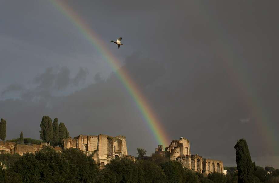 A funny thing happened on the way to the Forum:A goose flies by a double rainbow over the Palatine Hill in Rome. Photo: Alessandra Tarantino, Associated Press