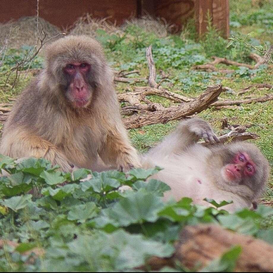 Born Free USA Primate Sanctuary Photo: Born Free USA Primate Sanctuary, Courtesy