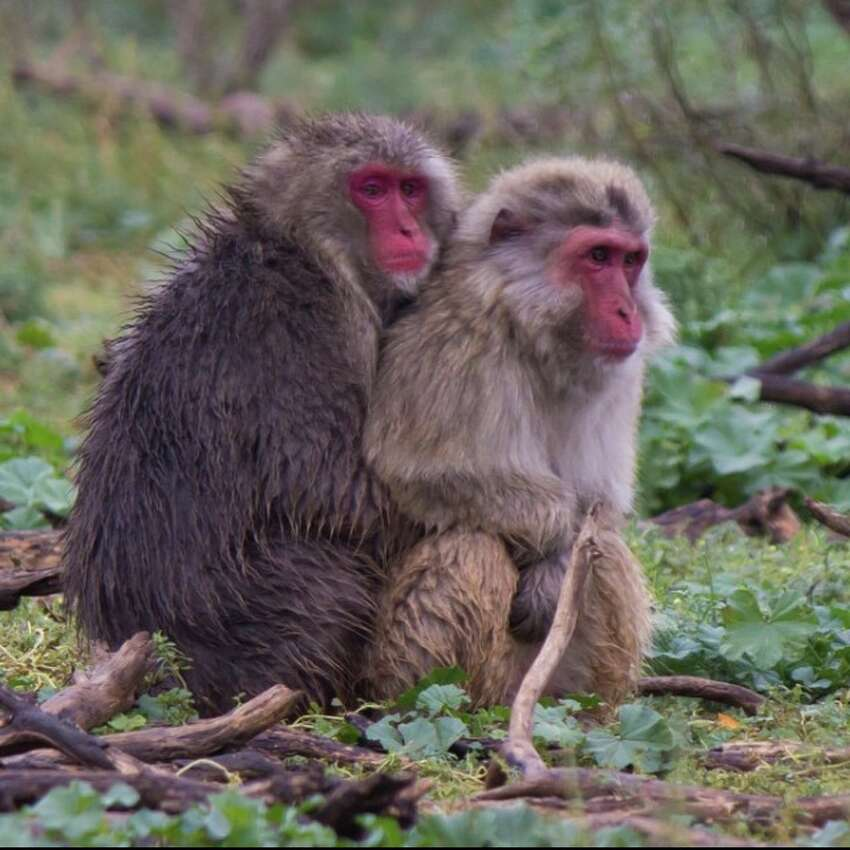 Born Free USA Primate Sanctuary