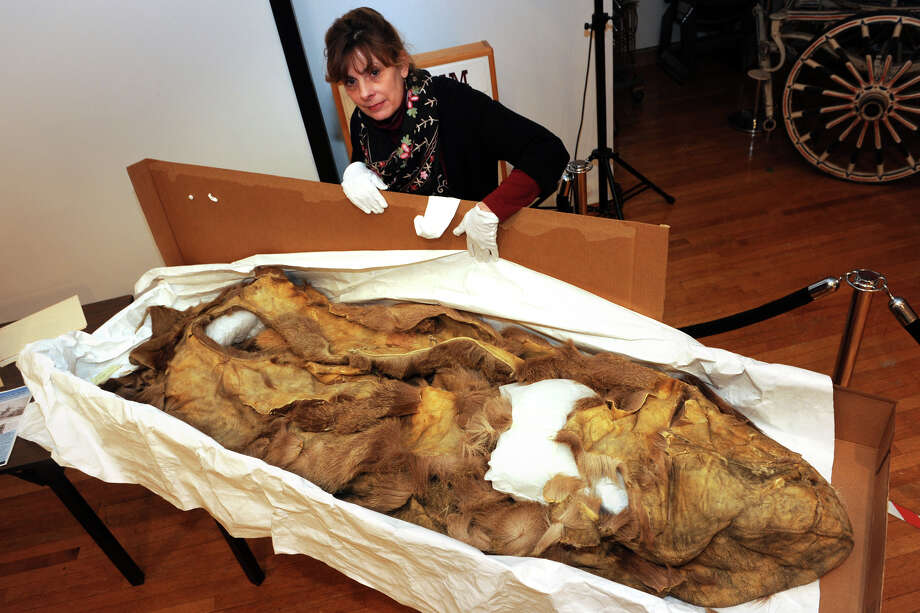 Adrienne Saint-Pierre, Curator at the Barnum Museum in Bridgeport, displays an antique sleeping bag dating back to 1884, when it was used during the rescue of The Greely Expedition. The ill-fated arctic expedition was led by Adolphus Greely. Photo: Ned Gerard / Connecticut Post