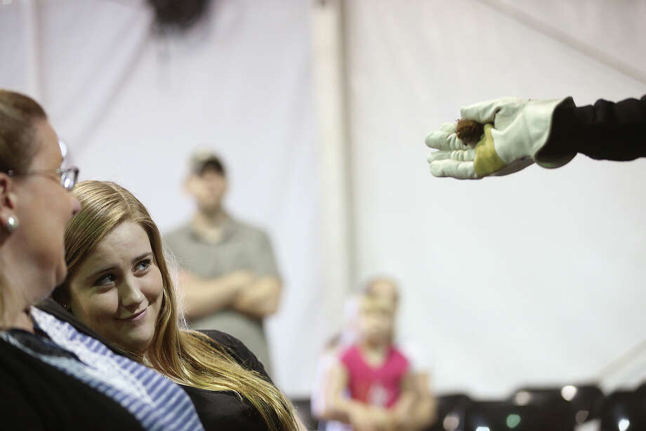 Maddie Reeder, 16, reacts to a Big Brown Bat during the San Antonio Stock Show and Rodeo's Bats, Mysteries and Myths exhibit, Sunday, Feb. 16, 2014. The bat is native to Texas. Photo: JERRY LARA, San Antonio Express-News / © 2014 San Antonio Express-News