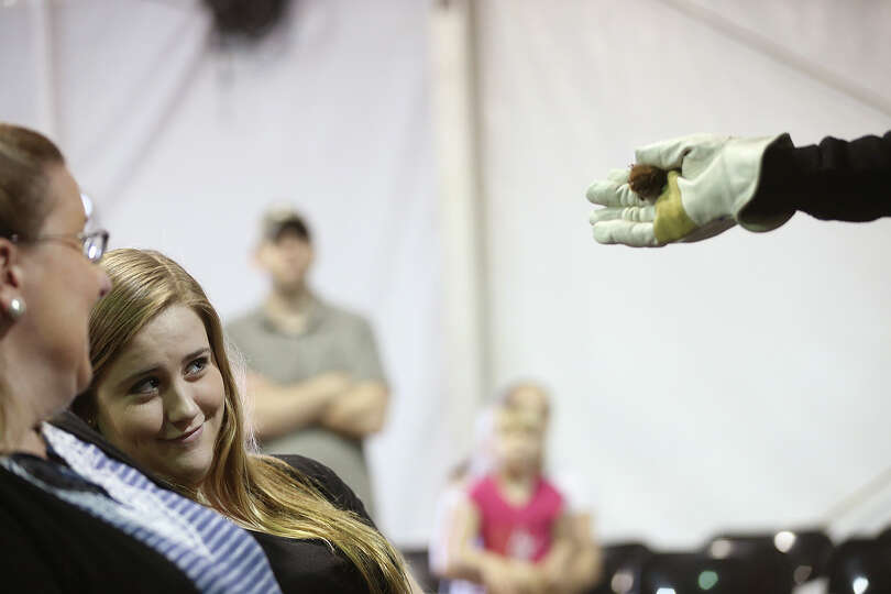 Maddie Reeder, 16, reacts to a Big Brown Bat during the San Antonio Stock Show and Rodeo's Bats, Mys