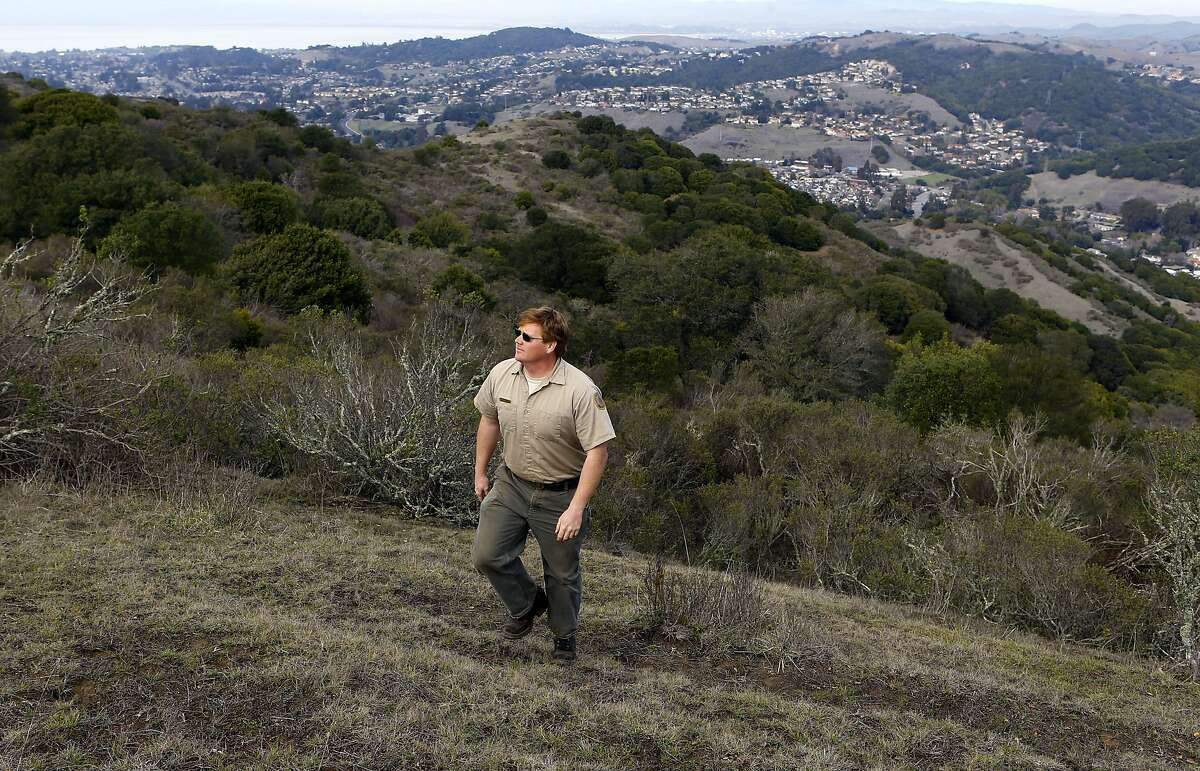 Justin Neville supervisor of Wildcat Canyon Regional Park walks above t the newly acquired property in the Berkley Hills which borders El Sobrante to the North, between Richmond and Orinda, Calif. on Wednesday Feb. 12, 2014. The East Bay Regional Park District acquired 362 acres last November to add to the Wildcat Canyon park lands.