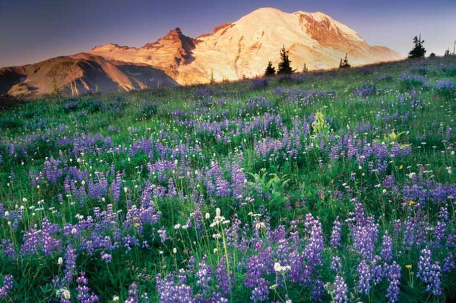 Visit Sunrise at sunrise:Everyone goes to Paradise, Mount Rainier's most popular spot. But fewer people make it to the Sunrise Visitor Center, the park's highest, drivable point. At 6,400 feet, it's 1,000 feet higher than Paradise, and offers gorgeous views of the mountain. Photo: Alan Majchrowicz, Seattle Magazine / Seattle Magazine