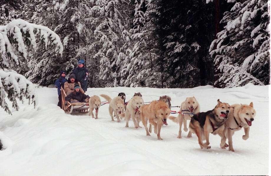 Go dog-sledding near Leavenworth. Photo: GRANT M. HALLER