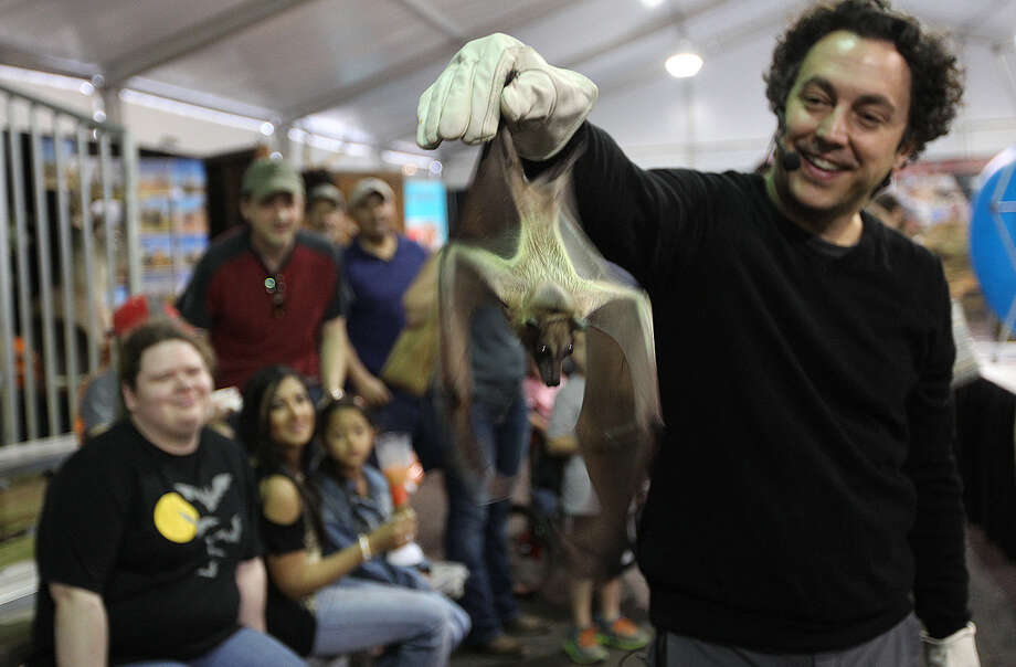Rob Mies — executive director of the Organization for Bat Conservation, whose goal is to promote the conservation and preservation of the winged mammals — draws attention with a bat native to Africa at the San Antonio Stock Show & Rodeo. Photo: Photos By Jerry Lara /San Antonio Express-News / © 2014 San Antonio Express-News