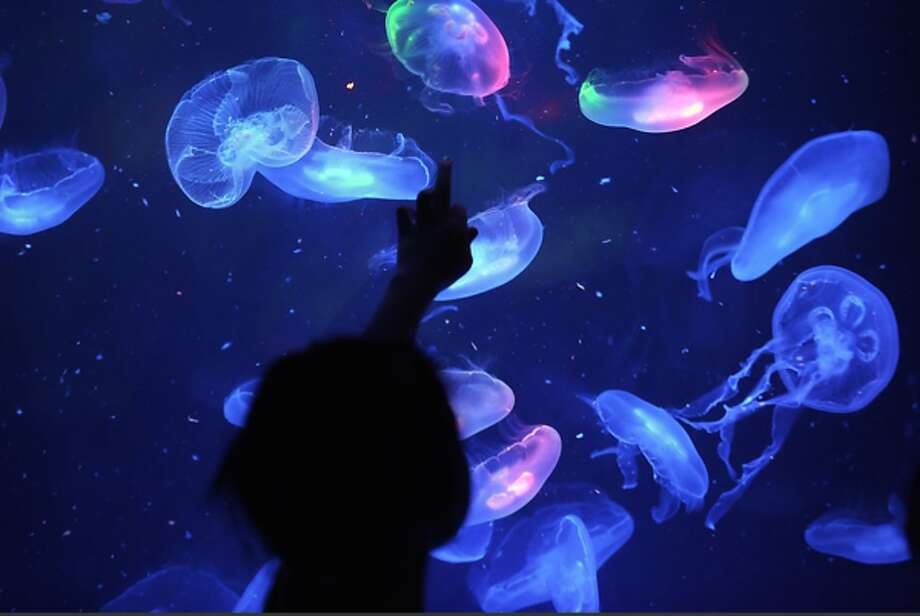 "Learn the differences between vertebrates & invertebrates. Go on an aquarium scavenger hunt for local invertebrates. See and touch live intertidal animals at the Maritime Aquarium's ""Jiggle A Jelly"" touch-a-jellyfish exhibit."