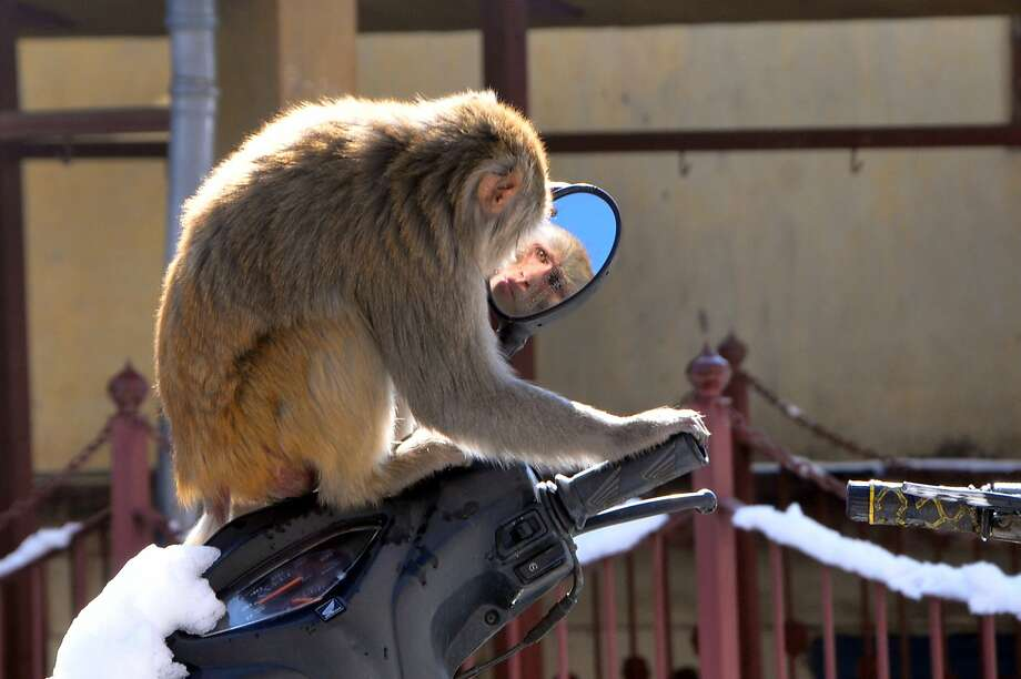 Born to be wild:Always adjust your rear-view mirror before starting the engine. (Shimla, India.) Photo: Stringer, AFP/Getty Images