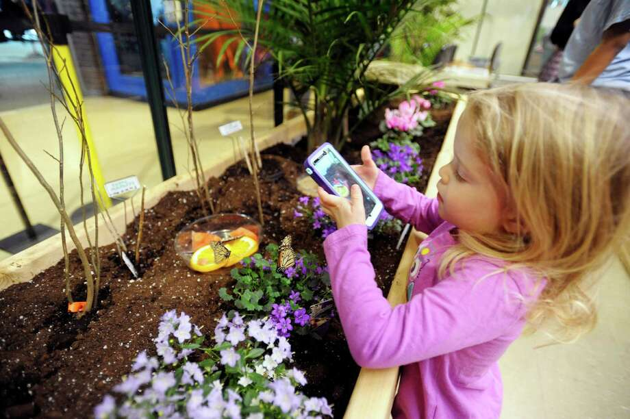 Jayden Matula, 3, from Delmar uses her mother's cell phone to take a photograph of butterflies inside the butterfly house at MiSci (museum of innovation and science) Tuesday morning, Feb. 18, 2014, in Schenectady, N.Y.   (Paul Buckowski / Times Union) Photo: Paul Buckowski / 00025781A