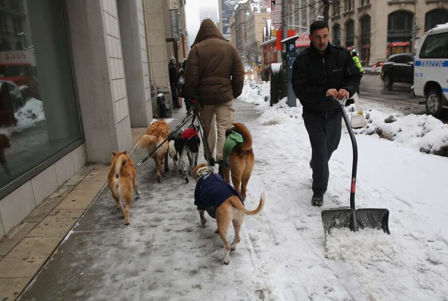 NEW YORK, NY - FEBRUARY 18:  A dog walker moves his wards up Park Avenue as another man shovels snow on February 18, 2014 in New York City. The city has reportedly received a total of about four feet of snow so far in 2014.  (Photo by John Moore/Getty Images) Photo: Getty Images