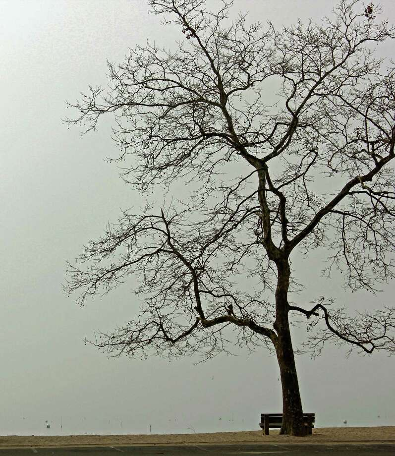 """Darien artist Bonfils is donating a limited-edition photograph """"Pear Tree Views"""" to the silent auction of the second annual Celebration of Trees photo contest reception in Darien. Photo: Contributed Photo, Contributed / Darien News"""