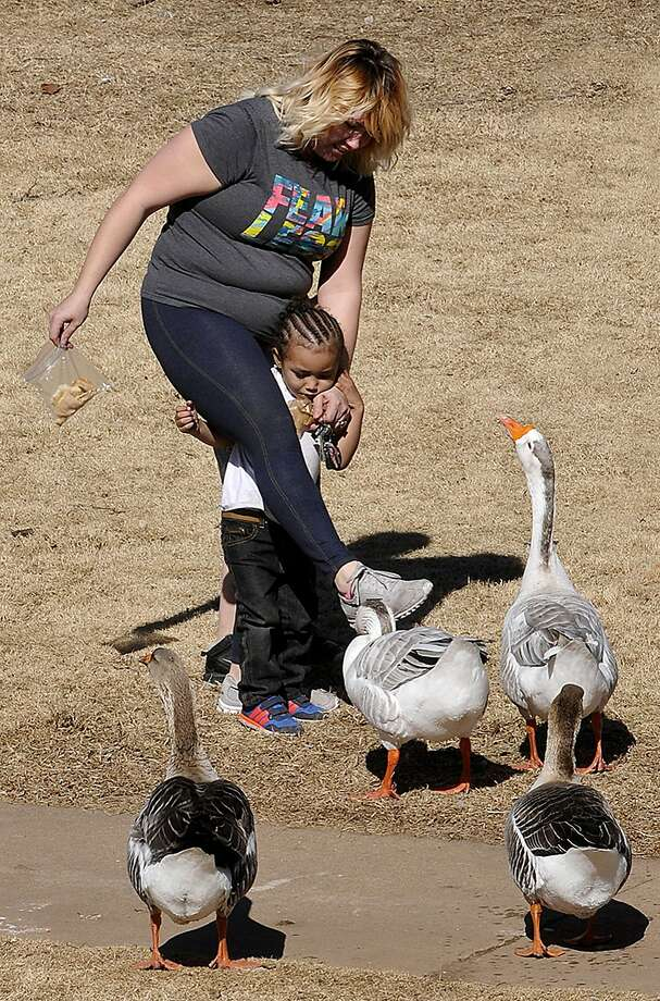 Shoo, geese, shoo! When geese looking for handouts get too aggressive, Nicole Morgan comes 