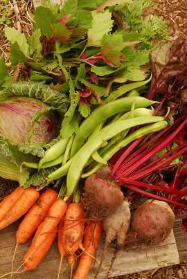 This June harvest of magenta spreen, cabbage, runner beans, carrots and beets grew mostly with spring rainfall.