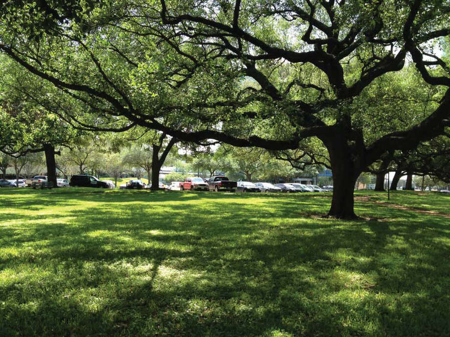 The city praised a Houston developer for saving oak trees on the site of its project. (PM Realty Group) Photo: PM Realty Group