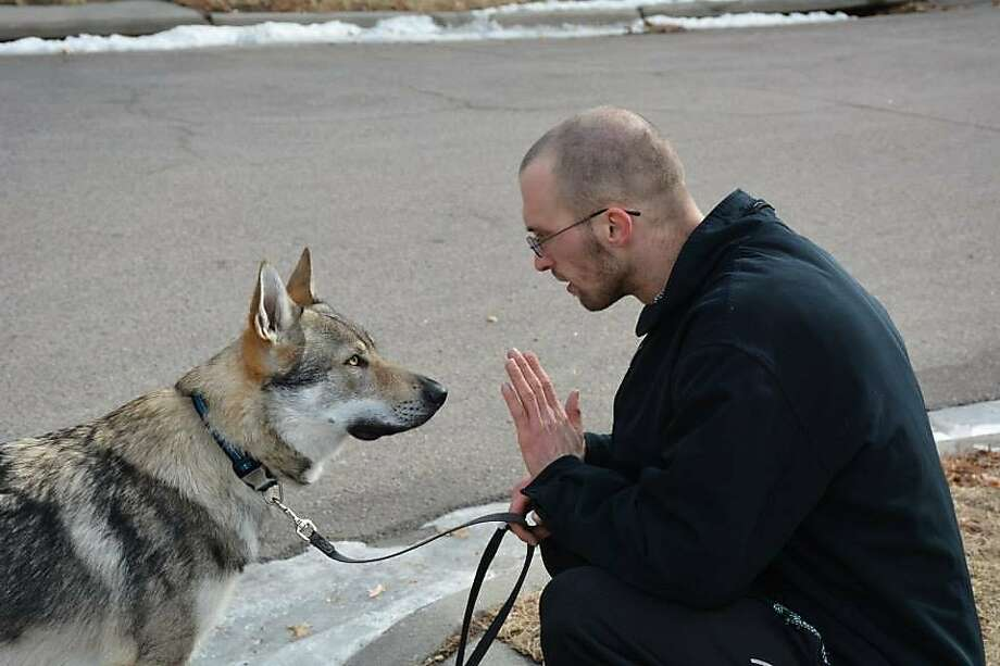 Mars barred: Alex Kaftan gives Mars, his wolf hybrid dog, a command in Lincoln, Neb. Last week a judge denied Kaftan's motion to let the dog remain in Lincoln after city officials said such crossbreeds are prohibited by ordinance. Kaftan has found a temporary home for the pet outside Lincoln city limits. Photo: Courtesy Alex Kaftan, Associated Press