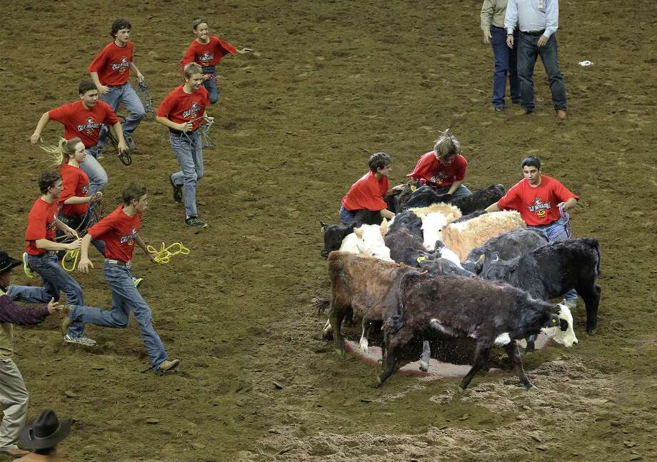 Youngsters run to collect a calf during the calf scramble at the 2014 San Antonio Stockshow and Rodeo on Wednesday, Feb. 19, 2014. Laughlin finished with a time of 13.86. Photo: Kin Man Hui, San Antonio Express-News / ©2014 San Antonio Express-News