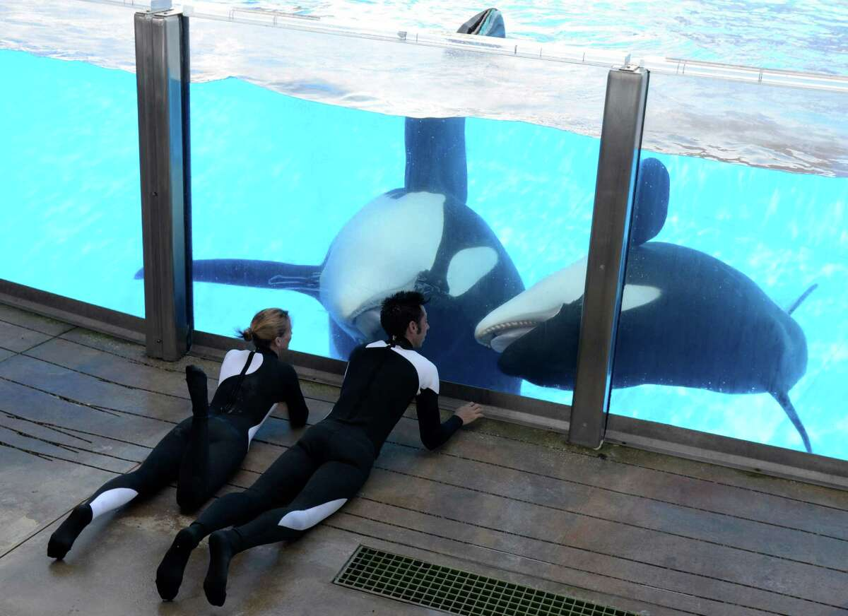 In a March 7, 2011 photo, Kelly Flaherty Clark, left, director of animal training at SeaWorld Orlando, and trainer Joe Sanchez work with killer whales Tilikum and Trua, right, during a training session at the theme park's Shamu Stadium in Orlando, Fla. (AP Photo/Phelan M. Ebenhack)