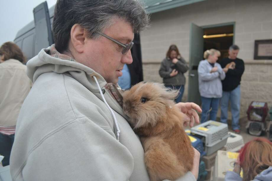 Jeff Vosseteig with a lion head rabbit, one of 80 brought to Texas after being rescued in Indiana. Photo: SPCA Texas