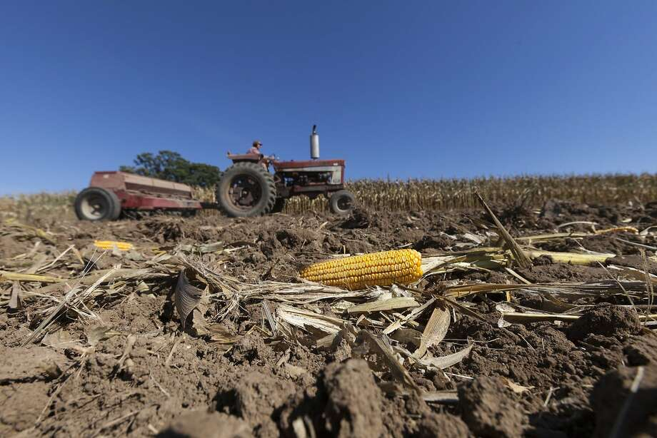 While an agricultural survey found the number of farms has declined and farmers are aging, the values of crops and livestock have hit record highs. Photo: Andy Manis, Associated Press