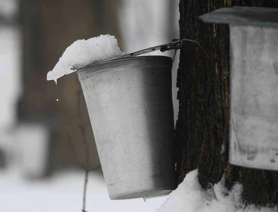 A snow-covered bucket tap hangs from a row of maple trees along Umpawaug Road, near New Pond Farm, in Redding, Conn. Wednesday, Feb. 19, 2014.  The extreme cold conditions are not optimal for maple sugaring and local farms are being affected. Photo: Tyler Sizemore / The News-Times