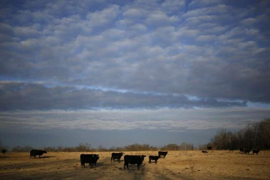 43. KentuckyAverage time: 2:14 Photo: Luke Sharett, Bloomberg