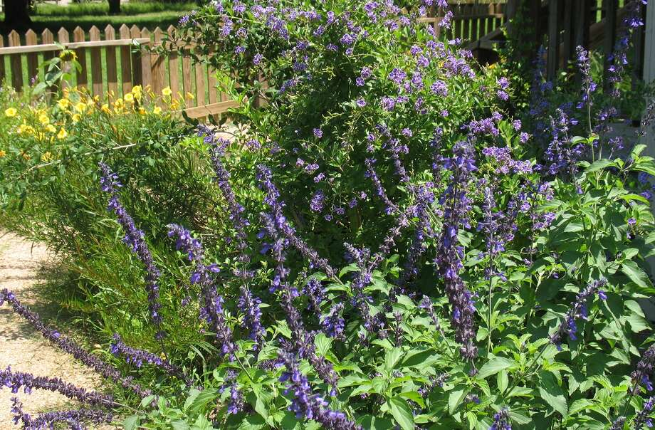 A diverse selection of native plants can include edible plants that can be incorporated along with perennials.