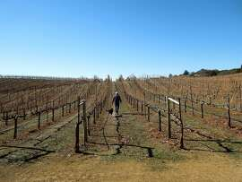 Tim Ward and dog, Cabernet, survey the vines at BobDog Wines in Cloverdale.