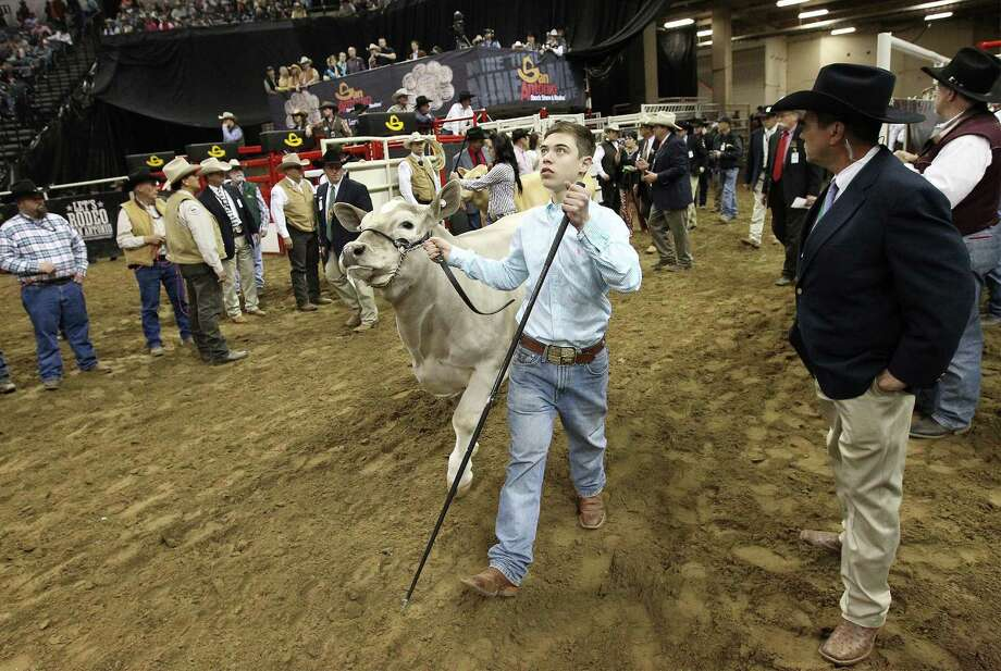 Braeden Brooks Raub of Lampasas FFA brings out his All Other Breeds (AOB) steer, Beaner, into the arena for the Grand Champion Steer judging at the 2014 San Antonio Stockshow and Rodeo at the AT&T Center on Friday, Feb. 21, 2014. Beaver was selected as the grand champion winner over 1,419 other animals in this year's competition. Photo: Kin Man Hui, San Antonio Express-News / ©2013 San Antonio Express-News