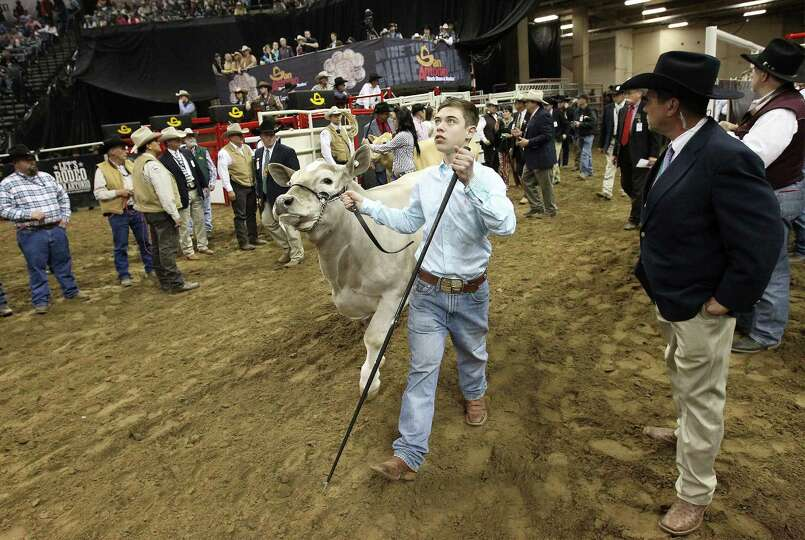 Braeden Brooks Raub of Lampasas FFA brings out his All Other Breeds (AOB) steer, Beaner, into the ar