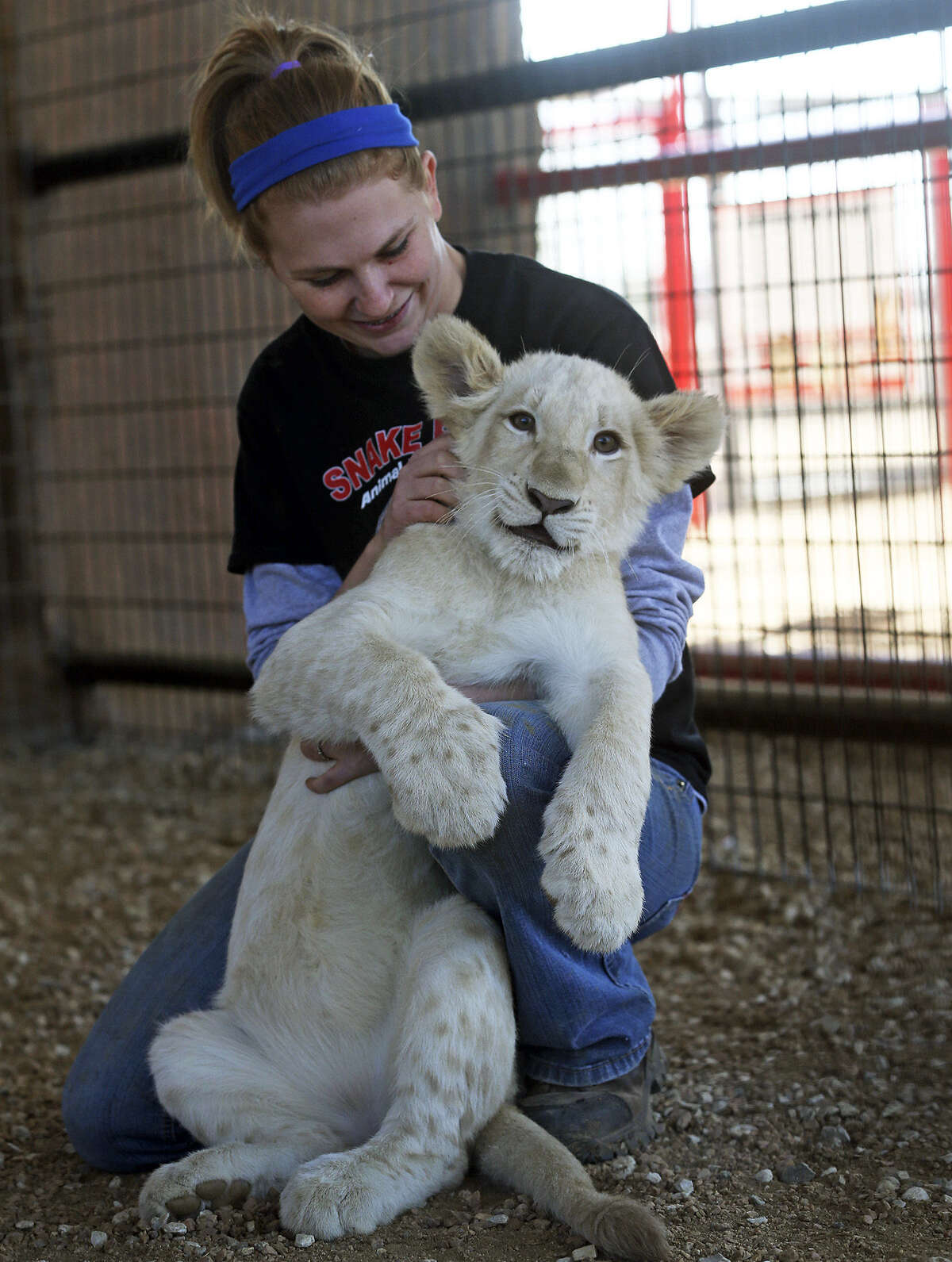 Animal trainer Jessica Darby has fun with a white lion cub at the New Braunfels Animal World and Snake Farm Zoo. There are fewer than 300 white lions in the world.
