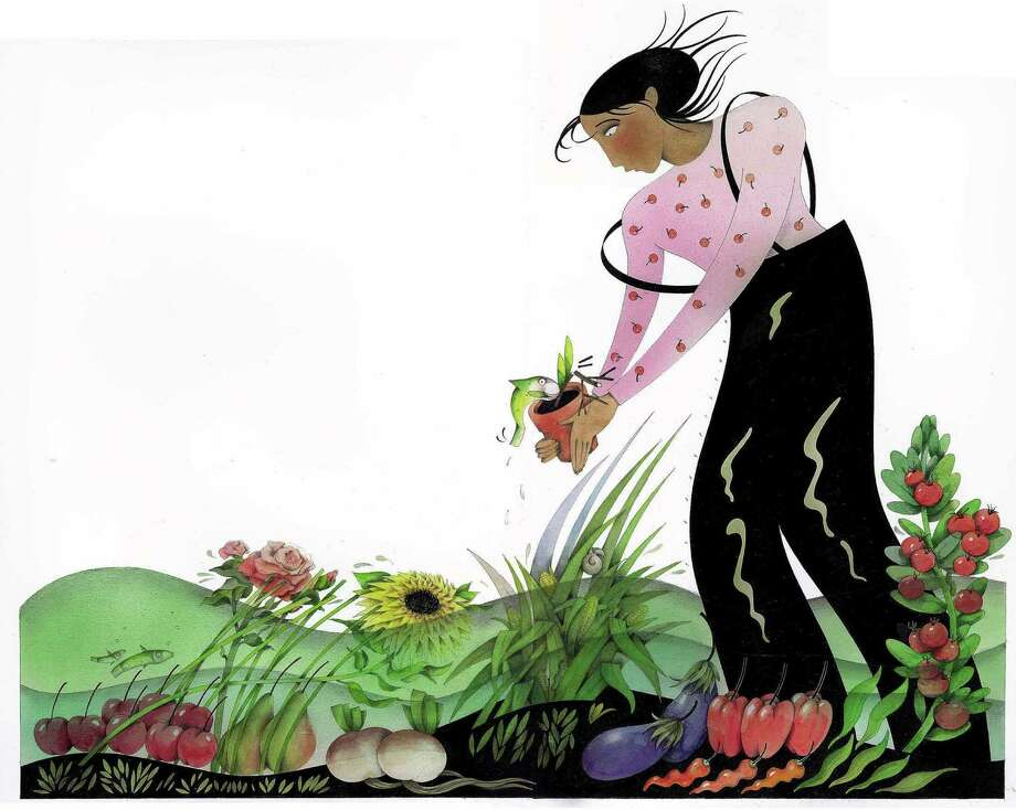200 dpi 66p x 53p Sydney Fischer color illustration of a female gardener standing in a flooded vegetable and flower garden holding a potted plant with a fish attached. San Jose Mercury News 1998   CATEGORY: ILLUSTRATION SUBJECT: El Nino garden ILLUS.jpg ARTIST: Sydney Fischer ORIGIN: San Jose Mercury News TYPE: JPEG SIZE: As needed ENTERED: 5/19/98 STORY SLUG: Stand-alone / © KRT 1998