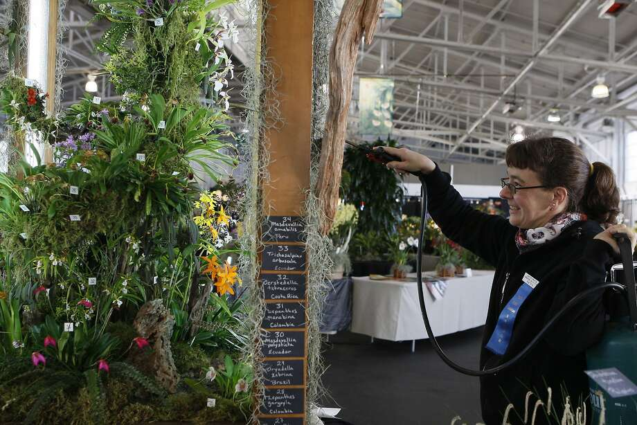 Katrin Graham waters an orchid display at the Pacific Orchid Exposition at Fort Mason in San Francisco. Photo: Codi Mills, The Chronicle