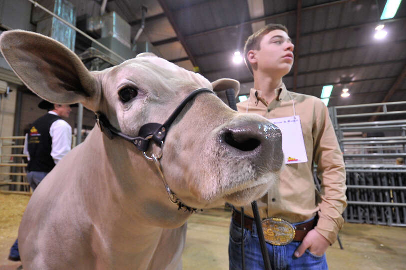 Braeden Raub, Lampasas, waits for a photo with his Grand Champion Steer, Beaver, after he sold for $