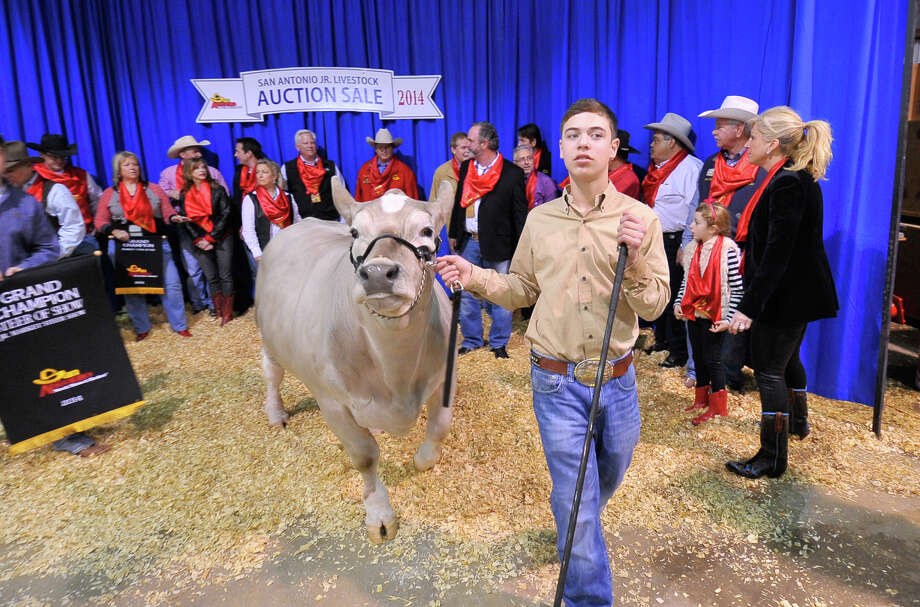 Braeden Raub, Lampasas walks with his Grand Champion Steer, Beaver, after he sold for $125,000 during the San Antonio Stock show and Rodeo Auction saturday. Photo: For The San Antonio Express-News