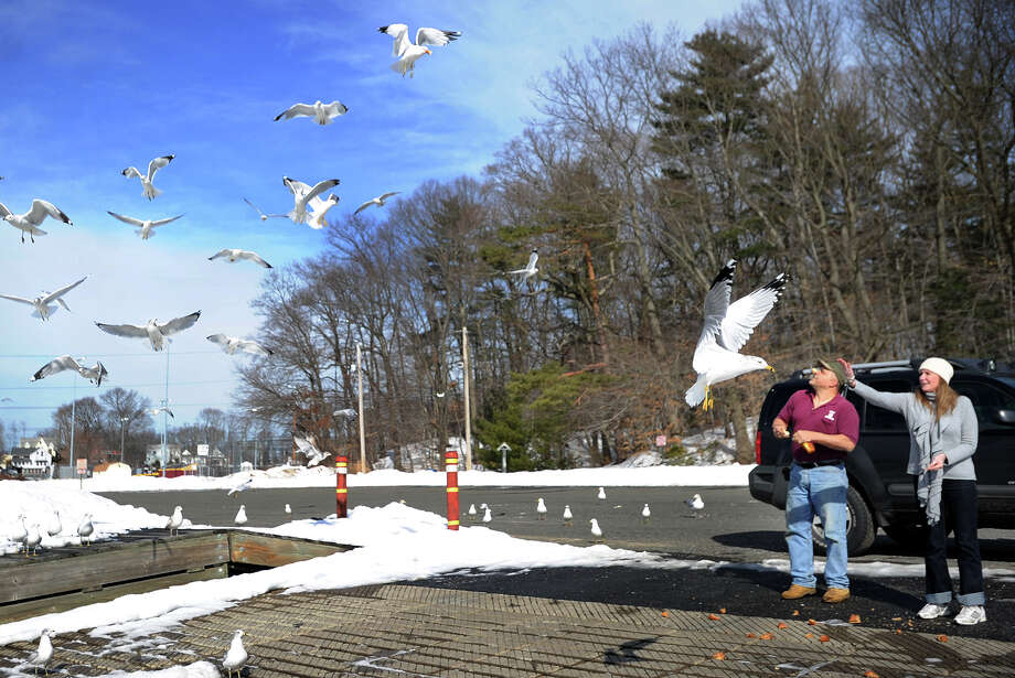 Tibor Viniczay, left, and Jennifer Embriano, both of Milford, feed the seagulls as they enjoy the warm weather at the Milford Harbor boat launch in Milford, Conn. on Sunday, February 23, 2014. Photo: Brian A. Pounds / Connecticut Post