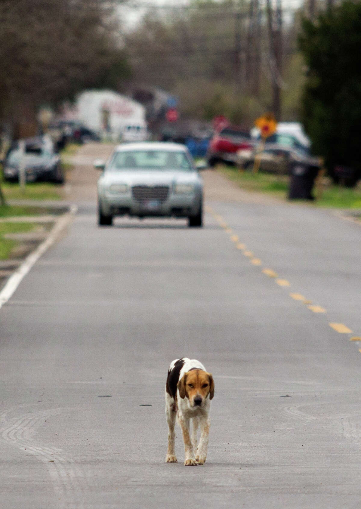A stray dog walks along Trenton Road on Saturday. Volunteers with the Corridor Rescue are attempting to rescue many of the strays.