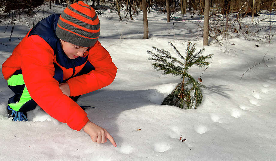 Bill Sequeira, 11, of Fairfield, studies opossum tracks in the snow at an animal tracking class Saturday at the Connecticut Audubon Center at Fairfield. Photo: Mike Lauterborn / Fairfield Citizen contributed