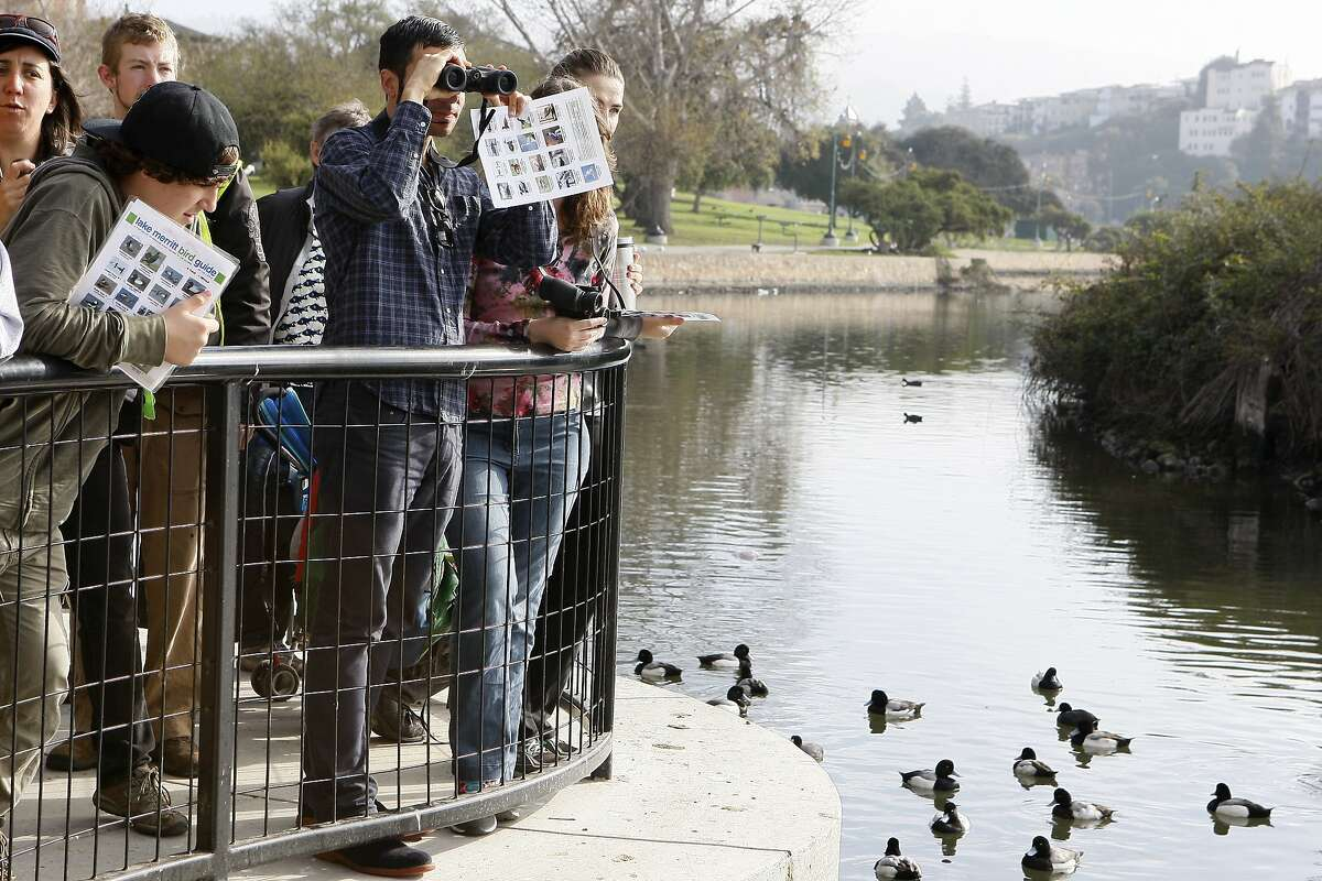 Sergio Fare uses a pair of binoculars to view different water birds during a bioblitz at Lake Merritt on February 23, 2014 in Oakland, Calif. The bioblitz allows members of the community to find species at Lake Merritt and record their observations and photos to identify and document the different species in the area.