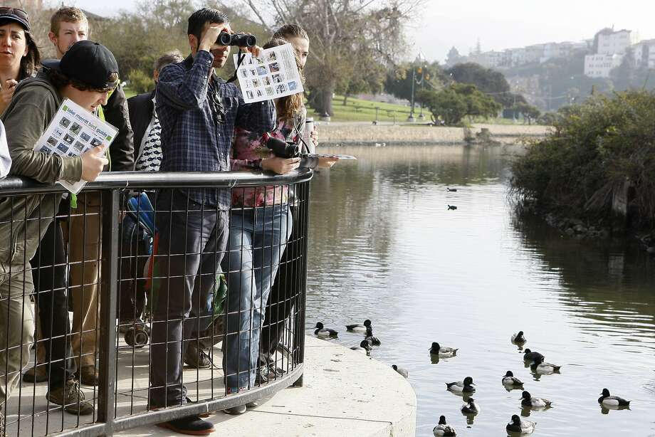 Sergio Fare uses binoculars to help him identify aquatic birds at Lake Merritt during a bioblitz event. Photo: Codi Mills, The Chronicle