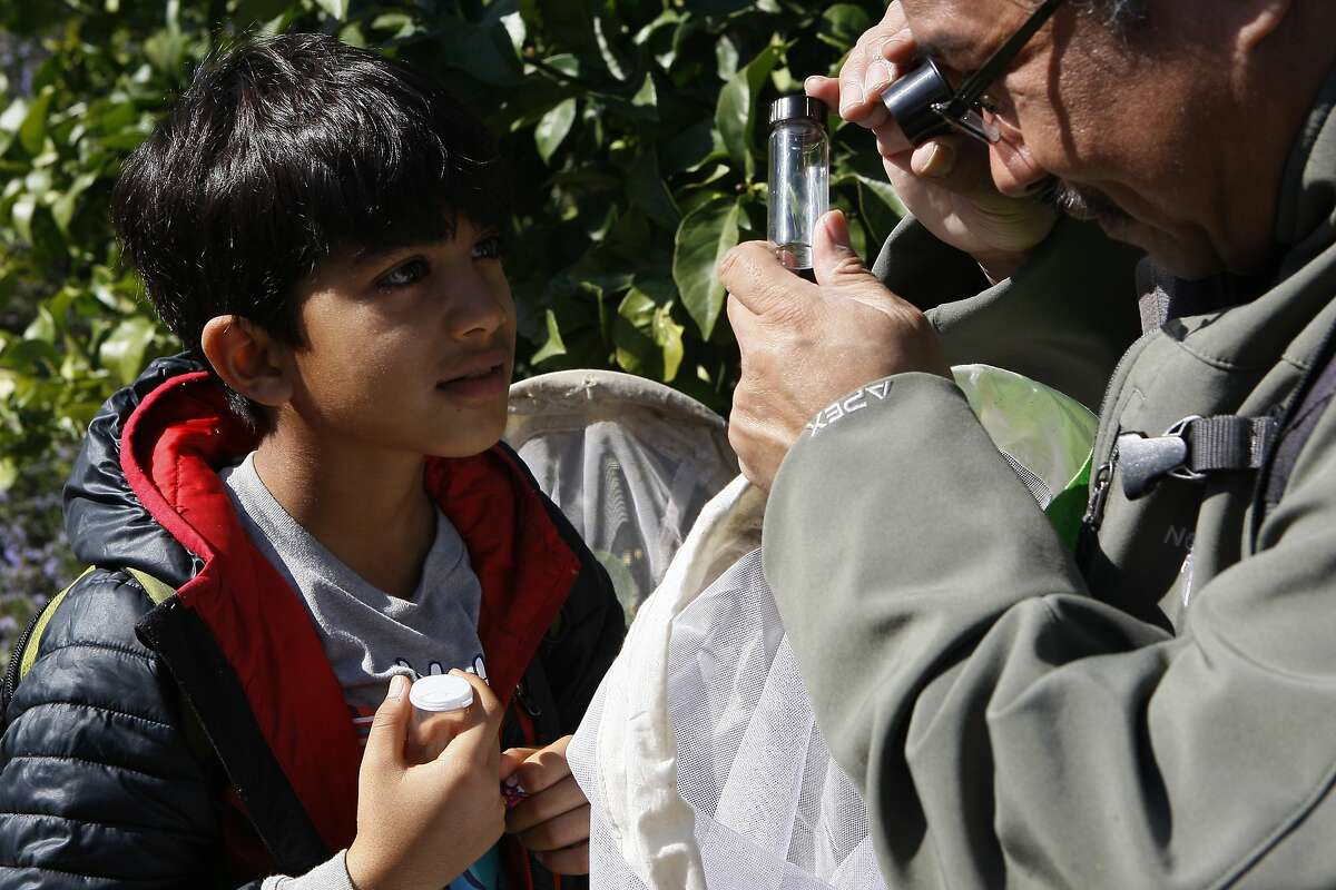 Prakrit Jain, 9, (left) waits for Eddie Dunbar (right) to help him identify various insects during a bioblitz at Lake Merritt on February 23, 2014 in Oakland, Calif. Jain is working on a project with Dunbar, the head of the Insect Sciences Museum of California, to help identify insects Dunbar has photographed.