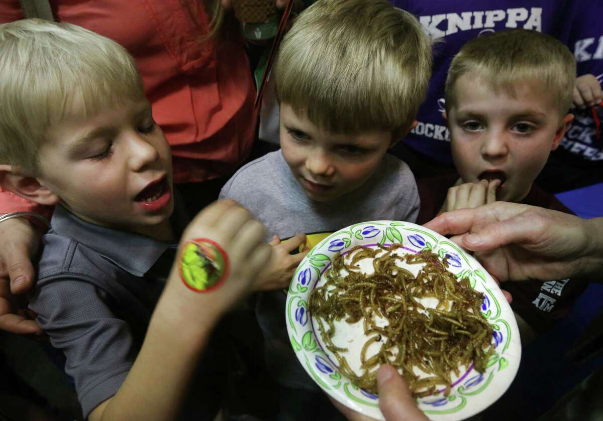 Hudson Thigpen, left to right, Nolan Riff and Nicholas Riff, all home schooled students, try some fried beetle larva at the Insect Expo. Close to 1000 area students got a close up look at creepy crawlers at an expo designed to teach kids about the insects on earth. The event was hosted by the Southwestern Branch Entomological Society of America, Texas A&M AgriLife Extension Service and Bexar County Master Gardeners at El Tropicano Riverwalk Hotel, Monday, Feb. 24, 2014.