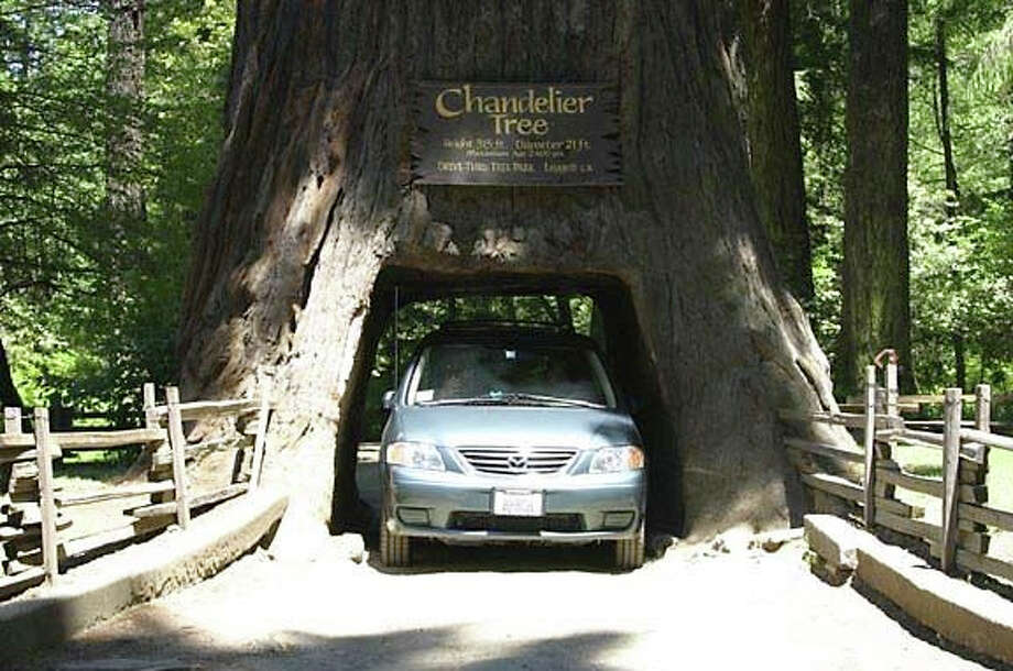 Avenue of the Giants and the Chandelier Tree at Drive-Thru Tree Park