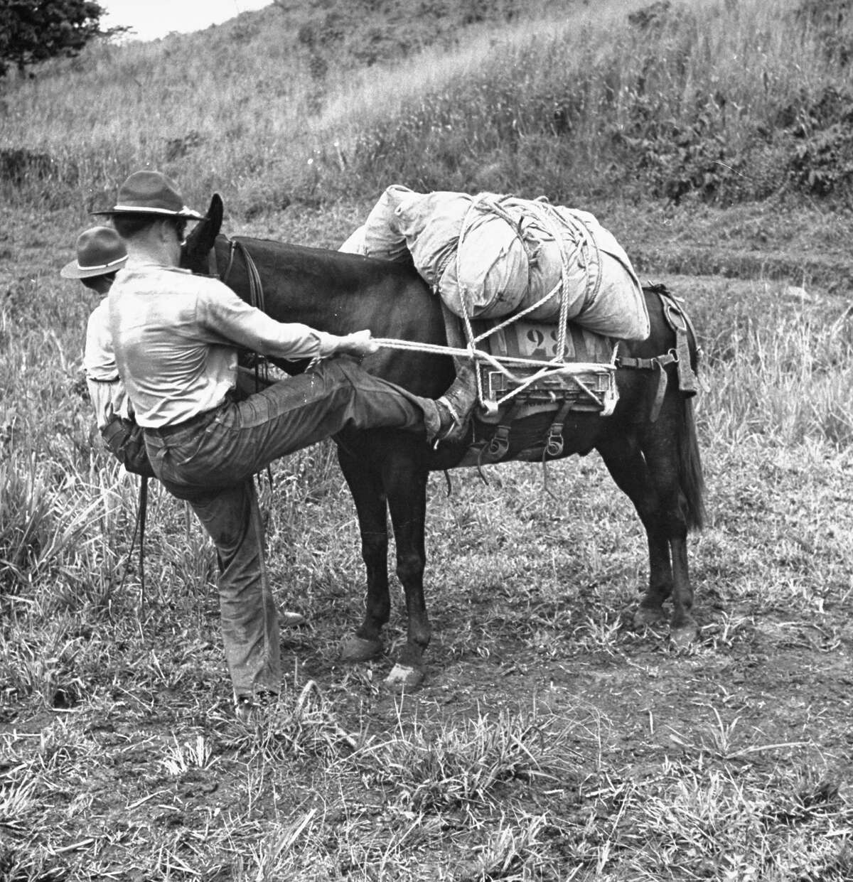 US soldiers securing pack to back of mule.