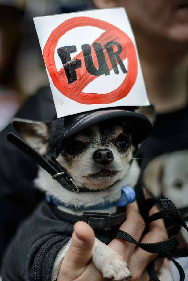 I admit the leather hat strap somewhat undercuts my message: A fur-bearing canine demonstrates against the killing of animals for their fur outside the Hong Kong International Fur & Fashion Fair. Photo: Philippe Lopez, AFP/Getty Images
