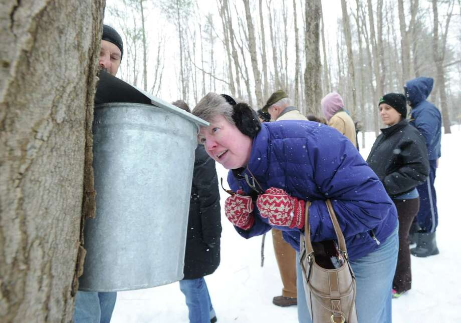 Kara Donahue of Riverside views a sap bucket attach to a maple tree during the Greenwich Land Trust winter nature walk at Duck Pond Hill, Greenwich, Conn., Tuesday, Feb. 25, 2014. Steve Conaway, a stewardship & outreach manager for the trust, led the tour and spoke about how wildlife survives the winter and how to identify trees and plants without their leaves. Photo: Bob Luckey / Greenwich Time