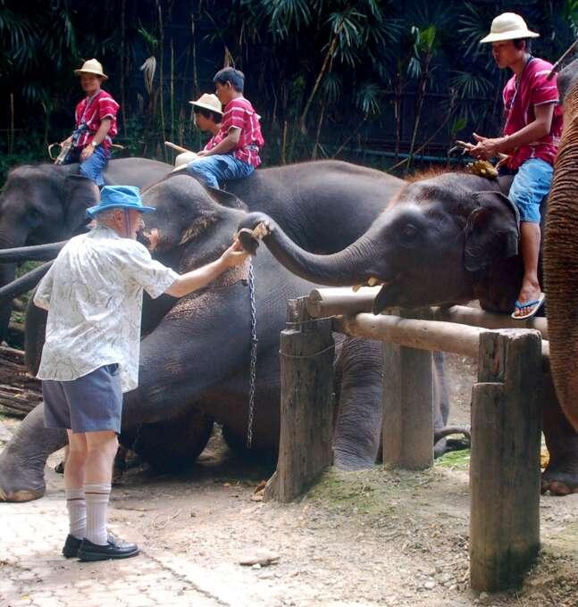 "5. Tourist feeding elephants: ""An Australian man feeds a baby elephant fresh sugar cane. It's quite amazing how dexterous their trunks are."" Photo: Sean Paul Kelley, For The Chronicle"
