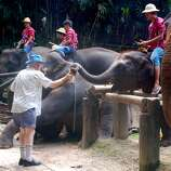 "5. Tourist feeding elephants: ""An Australian man feeds a baby elephant fresh sugar cane. It's quite amazing how dexterous their trunks are."""