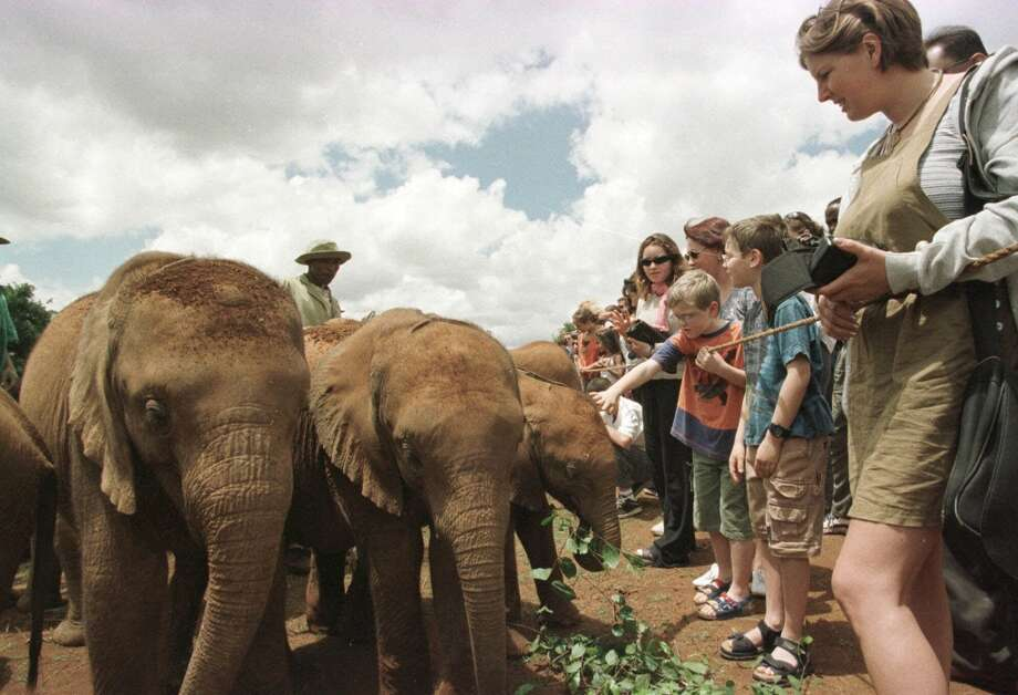 Tourists greet a herd of baby elephants at a national park outside Nairobi, Kenya Tuesday, April 11, 2000 . The dozen infant elephants have filled Kenya's private elephant orphanage to the highest capacity of its 13-year history. All or most of the months-old creatures arrived as a result of poaching following a one-time, experimental waiver of a 1989 ivory ban, their keepers say - a ban they fear a U.N. conference in Nairobi this week will vote to lift. (AP Photo/Sayyid Azim) Photo: SAYYID AZIM, AP