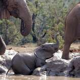 A baby elephant takes a mud bath at a water hole in the Addo Elephant National Park, 80 km (50 miles) north-west of Port Elizabeth, South Africa October 31, 2005. Picture taken October 31, 2005.  REUTERS/Howard Burditt